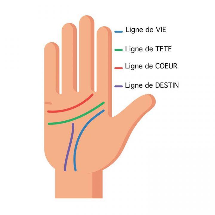Lignes de la main apprenez les lire et d couvrez leur signification - Dessin de la main ...