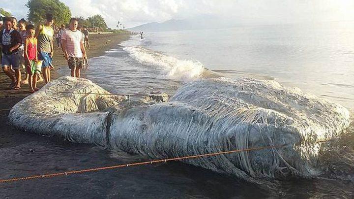 cadavre monstre marin échoué sur la plage