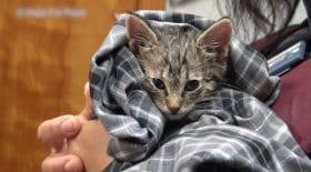 ce petit chaton a été sauvé in extremis !