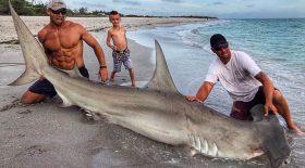 requin marteau homme viril pêcheur muscles