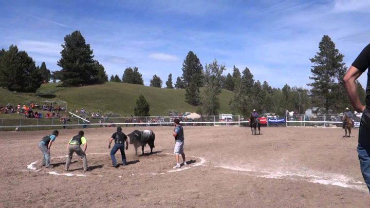 taureaux chargent hommes volontaires jeu corrida rodéo