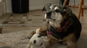 Cette chienne perd son maître subitement, sa réaction est déchirante