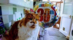 record longévité plus vieux chat 30 ans