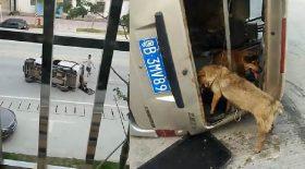 sauver chien viande voleur trafiquant accident voiture