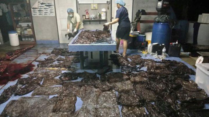 baleine meurt sacs en plastique