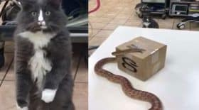 expression visage drôle de tête chat voit un serpent