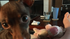 chien, chienne, animaux, animal de compagnie, peluche, adorable, famille