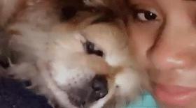 chien vieux, adorable attention, maitresse, mya davis, vidéo,