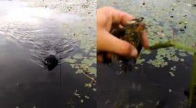 Un chien sauve un oisillon de la noyade !