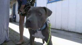 Ce chien a sauvé sa famille d'une tragédie