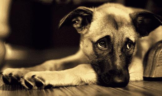 des policiers ont sauvé la vie de ce chien coincé dans une voiture en plein soleil