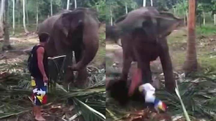 touriste mis à terre coup de trompe éléphant