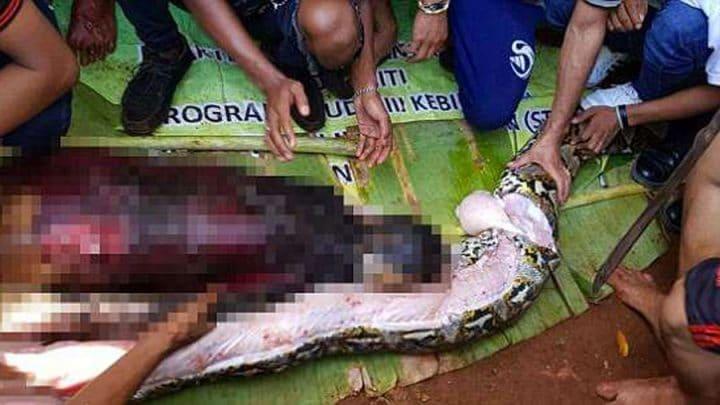 femme mangée par un python dans son estomax