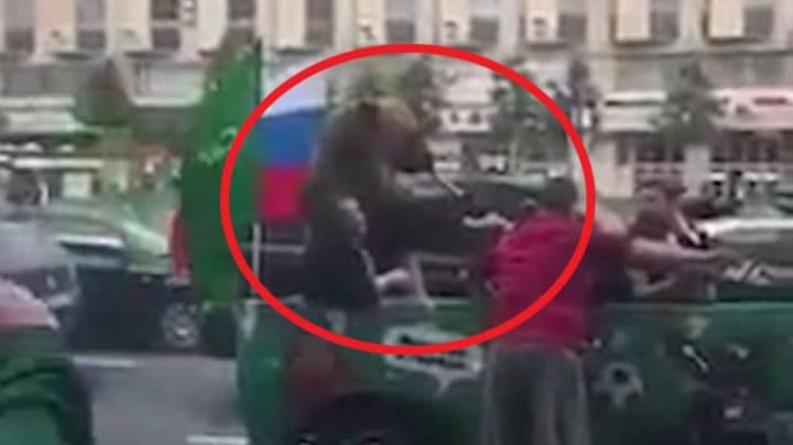 ours vuvuzela coupe du monde