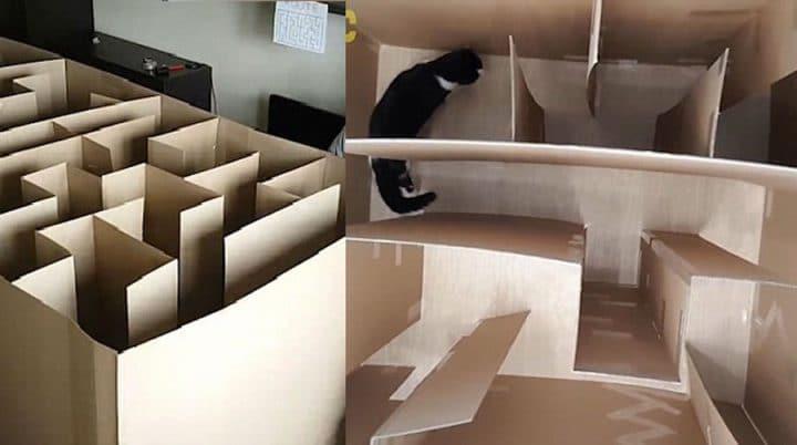 il construit un labyrinthe en carton pour son chat va t. Black Bedroom Furniture Sets. Home Design Ideas