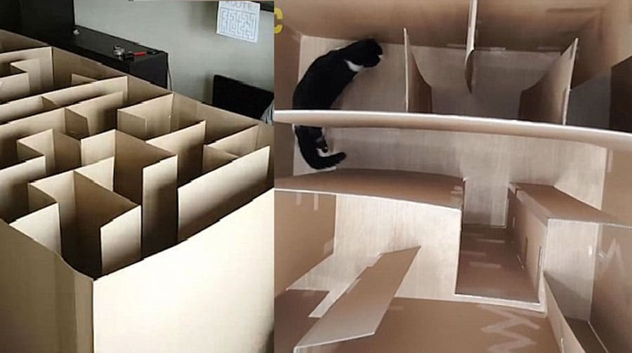 il construit un labyrinthe en carton pour son chat va t. Black Bedroom Furniture Sets. Home Design Ideas