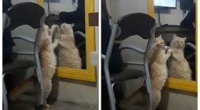 chat se voit dans le miroir
