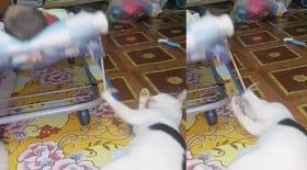 ce chat trop mignon berce son maitre