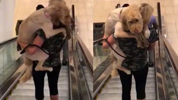 chien bras de sa maitresse descendre escalator