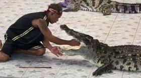 crocodile mange bras dresseur