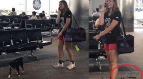 crottes de chien ramasse aéroport
