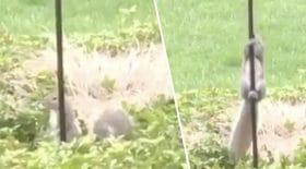une astuce pour éloigner les écureuils