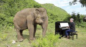 éléphante aveugle danse piano
