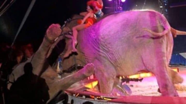 cirque accident éléphant tombe dans le public