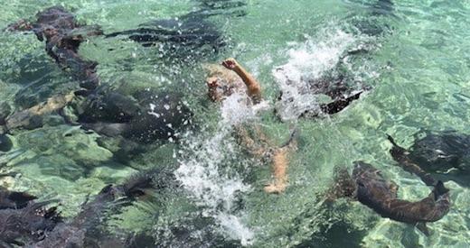 cette mannequin s'est fait attaquer par un requin