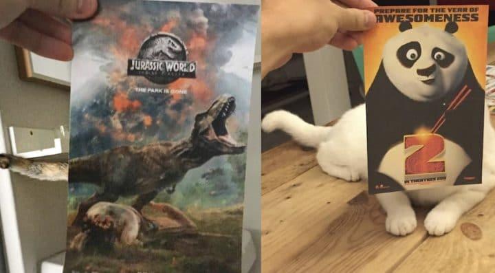Il incruste ses chats dans des affiches de films célèbres