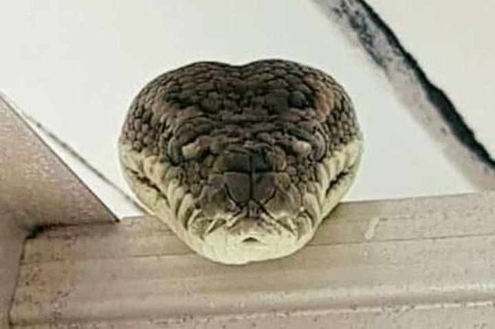 python tapis côtier