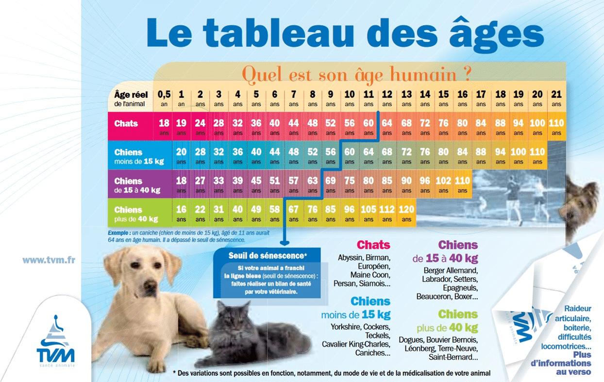 Age Reel Chien non : l'âge d'un chien n'est pas à multiplier par 7 pour avoir son