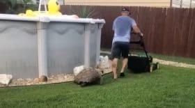 Cette tortue est obsédée par une tondeuse à gazon