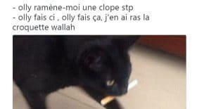 top tweet sur nos amis les chats