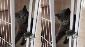 chat déverrouille cage flagrant délit rentre