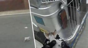 Un motard sauve un chaton