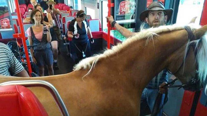 cheval prend le train en Autriche