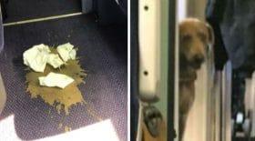 diarrhée chien voyage en train