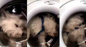 machine à laver chien enfermé
