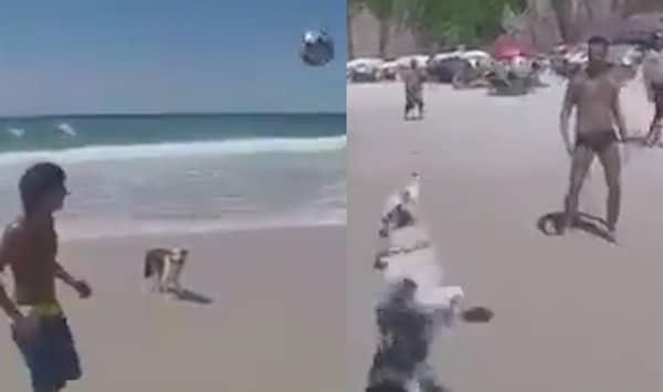 un chien jour au foot sur la plage