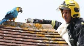 Insolite : ce perroquet insulte un pompier