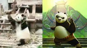 kung fu panda en vrai