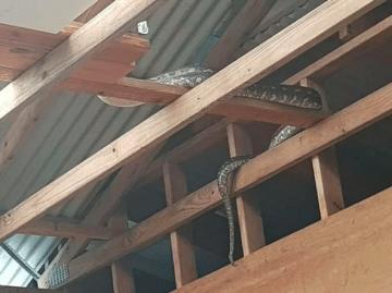 python plafond