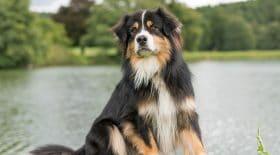 """Abandon : son chien n'est plus """"une peluche"""""""