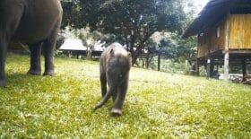Suki petit éléphant qui fait des clans aux touristes
