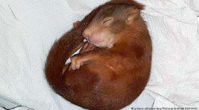 un homme poursuivi par un bébé écureuil