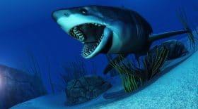 requin-plongeurs-grand-blanc-satan-images-predateur
