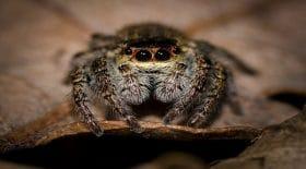 les araignées rentreraient dans les maisons à 19h35