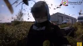 attaque de frelons asiatiques