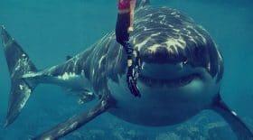 attaque de requin - surfeur - vide de son sang